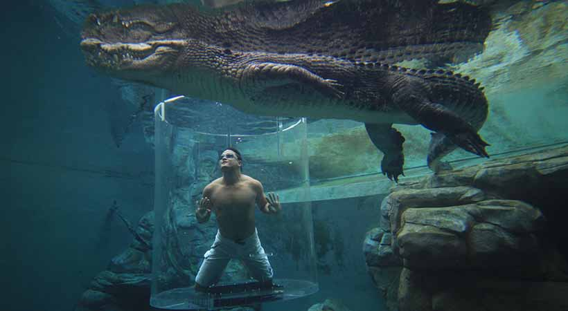 cage of death crocosaurus cove darwin man underwater with crocodile