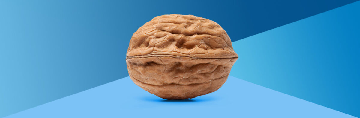 Walnut to represent the prostate on blue geometric gradient background